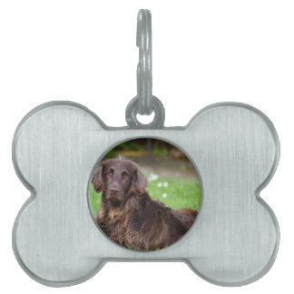 dog-782 placa de mascota