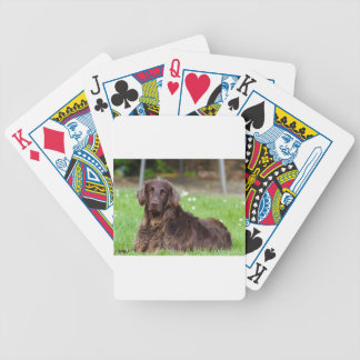 dog-782 bicycle playing cards