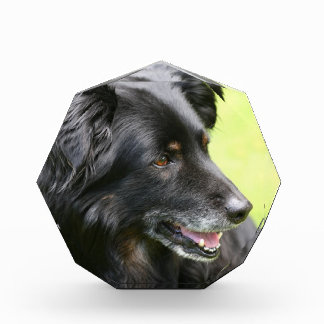 dog acrylic award
