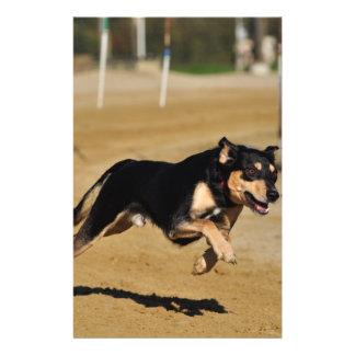 dog agility practicing flyer