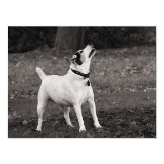 Dog Agog Photo Print