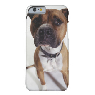 Dog, American Staffordshire Terrier sitting, Barely There iPhone 6 Case