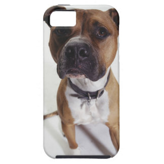 Dog, American Staffordshire Terrier sitting, iPhone SE/5/5s Case