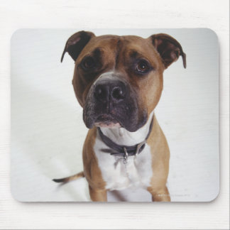 Dog, American Staffordshire Terrier sitting, Mouse Pad
