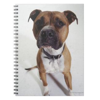 Dog, American Staffordshire Terrier sitting, Spiral Notebook