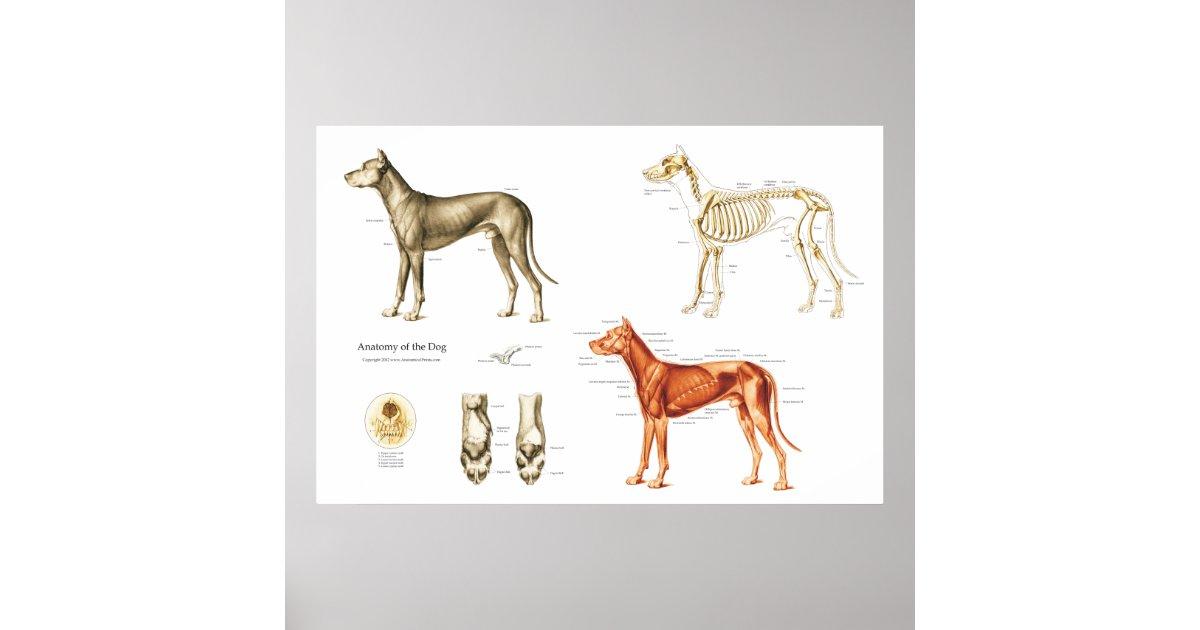 Gemütlich Dog Anatomy Skeleton Bilder - Menschliche Anatomie Bilder ...