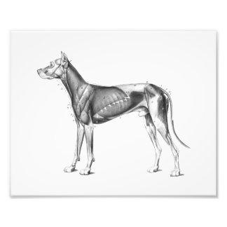 Dog Anatomy Print Muscles B/W Photo Art