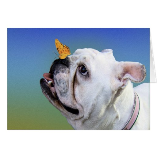 Dog and butterfly card