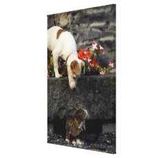 Dog and cat canvas print