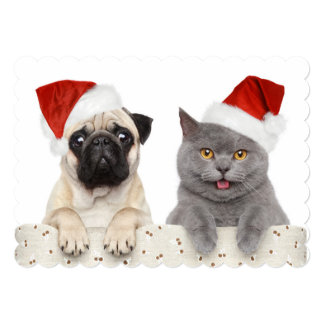 Dog And Cat In Red Christmas Hat Card