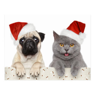 Dog And Cat In Red Christmas Hat Postcard