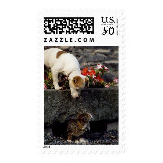 Dog and cat postage