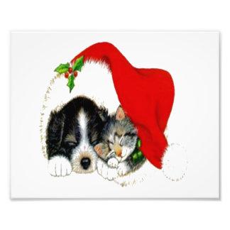 Dog and Cat Sharing Santa Hat Photographic Print