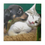 Dog and cat tiles
