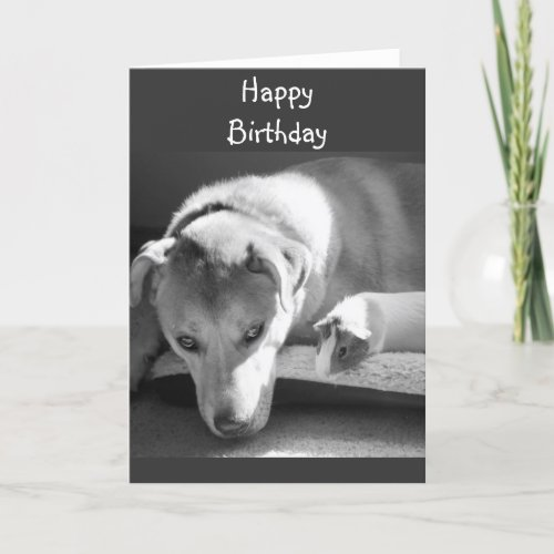 Dog and Guinea Pig Birthday Card
