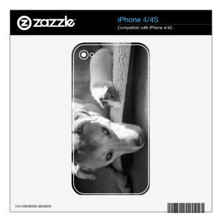 Dog and Guinea Pig iPhone 4 Skin