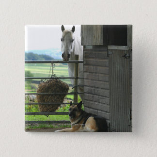 Dog and horse at ranch in Menton, France Pinback Button