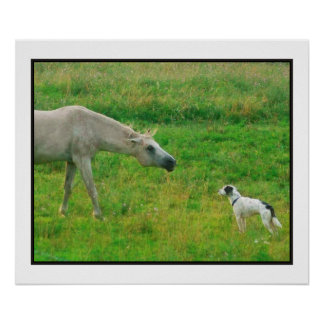 Dog and Horse Poster