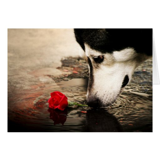Dog and Red Rose Gift Card