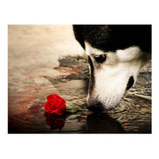 Dog and Red Rose Photography Postcard