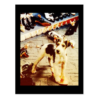 Dog and Shoes Postcard