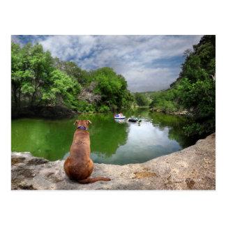 Dog at Barton Creek - Austin Texas Postcard