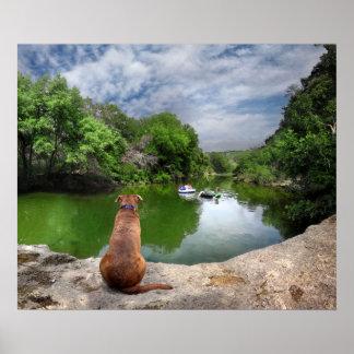 Dog at Barton Creek - Austin Texas Posters