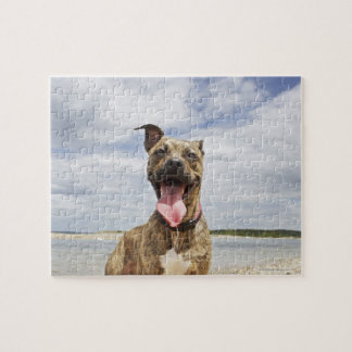 dog at beach jigsaw puzzle