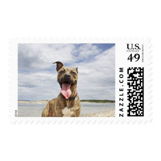 dog at beach postage