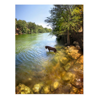 Dog at Ladybird Lake - Downtown Austin Texas Postcard