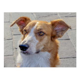 dog at lake postcard