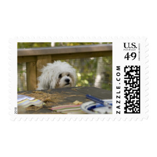 Dog at picnic table postage stamp