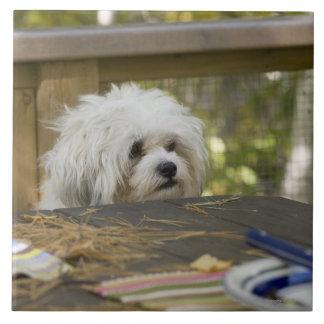 Dog at picnic table tile