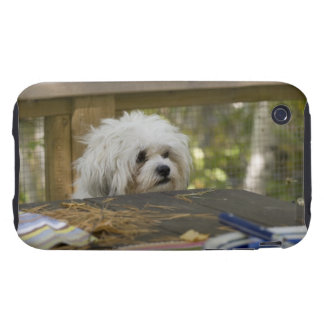 Dog at picnic table tough iPhone 3 covers