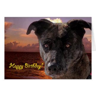 Dog at the Beach, Happy Birthday Greeting Card