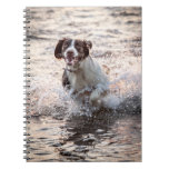 Dog At The Beach Notebook