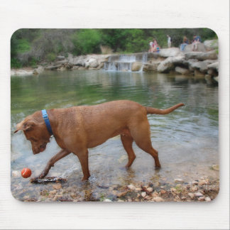 Dog at Waterfalls on Barton Creek in Austin Texas Mouse Pad