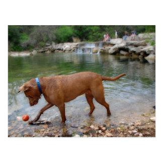 Dog at Waterfalls on Barton Creek in Austin Texas Postcard