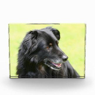 dog award