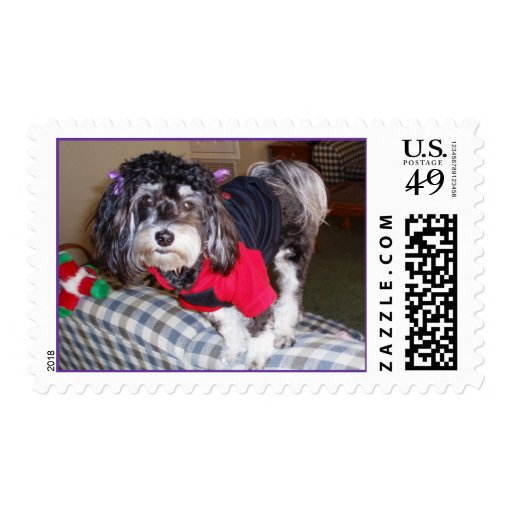 Dog Balancing on a Couch Postage Stamp