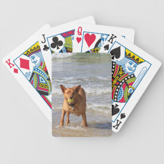 Dog & ball at beach bicycle playing cards