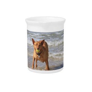 Dog & ball at beach pitcher