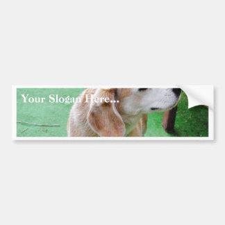 Dog Beautiful Bumper Sticker