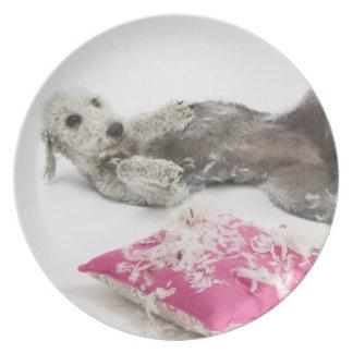 Dog behaviour training party plate