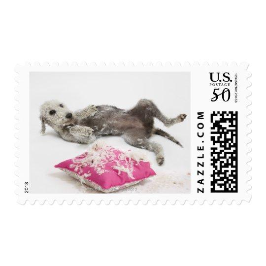 Dog behaviour training postage