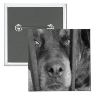 Dog behind Bars 2 Inch Square Button