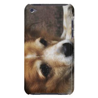 Dog, Bhaktapur, Bhaktapur District, Bagmati, iPod Touch Case