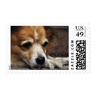 Dog, Bhaktapur, Bhaktapur District, Bagmati, Postage