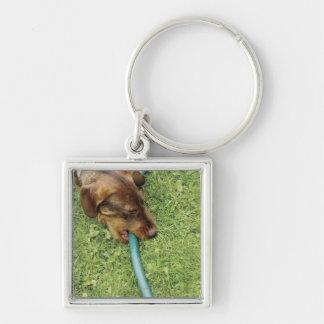 Dog biting on hose on grass and Dandelion leaves Keychain