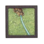 Dog biting on hose on grass and Dandelion leaves Premium Trinket Box